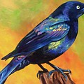 Grackle by Rory Viale