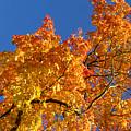 Gradient Autumn Tree by Sandra Rugina