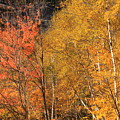 Grafton Notch Foliage by John Burk