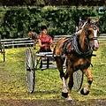 Grahamsville Ny Fair by Ericamaxine Price