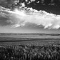 Grain Field by Leland D Howard