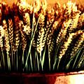 Grain In Copper Pot by Susie Weaver