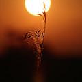 Grain In Silhouette by Jack Dagley