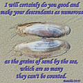 Grains Of Sand by Tikvah's Hope
