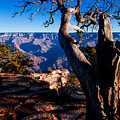 Grand Canyon 27 by Donna Corless