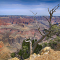 Grand Canyon 4 by Teresa Zieba