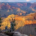 Grand Canyon At Sunset by Alan Toepfer