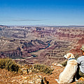 Grand Canyon Girl And Dog by Waterdancer