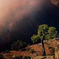 Grand Canyon Juniper by John Hight