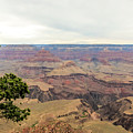 Grand Canyon No 2 by Phyllis Taylor