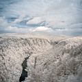 Grand Canyon Of Pa In Infrared by Guy Whiteley
