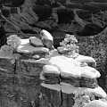 Grand Canyon Snow Black And White Photo by Patrick McGill