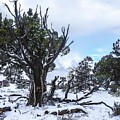 Grand Canyon South Rim After Winter Snowstorm by NaturesPix