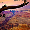 Grand Canyon Sunset by Ches Black