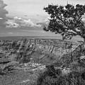 Grand Canyon Tree by John McGraw