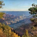 Grand Canyon View With Trees by Judy Coggin