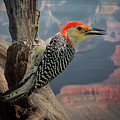 Grand Canyon Woodpecker by Janet Ballard