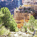 Grand Canyon16 by George Arthur Lareau