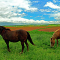 Grand-pre Horses by Gary Corbett