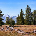 Grand Teton And Fence by Sharon Seaward