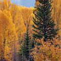 Grand Teton Fall by Cindy Archbell