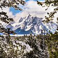 Grand Teton Through The Pines Horizontal by TL Mair