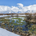 Grand Tetons From Willow Flats In Early April by Belinda Greb