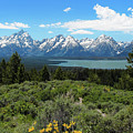 Grand Tetons by Jemmy Archer