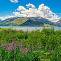 Grand Tetons Wildflowers by Evan Jones
