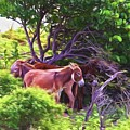 Grand Turk Donkeys In The Shade by Alice Gipson