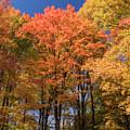Grandma Red's Woods by Peg Runyan