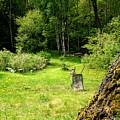 remembering my grandmas garden when I'm making my own  by Hilde Widerberg
