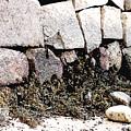 Granite And Seaweed by Paul Sachtleben