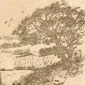 Grape Arbor On Brown by Debra Lynch