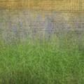 Grape Hyacinth by Robert Hauss