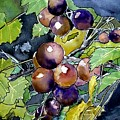 Grape Vine Still Life by Derek Mccrea