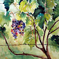 Grape Vines At Otter Creek by Kathy Sturr