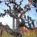 Grapes Aloft by Travis Elder