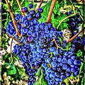 Grapes Full by Roxy Hurtubise