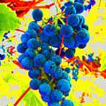 Grapes by Jerome Stumphauzer