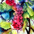 Grapes by Karen Stark