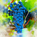 Grapes Of The Vine by Karl Knox Images