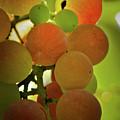 Grapes On The Vine by Joe Teceno