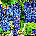 Grapes by Roxy Hurtubise