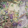 Grapevine Laurel Lakevineyard by Valerie Meotti