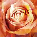 Graphic Rose by Lutz Baar