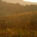 Grass And Sunshine by Mark Wagoner