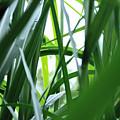 Grass by Carl Ellis