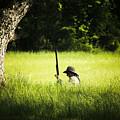 Grass Coverage by Kim Henderson