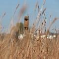 Grass by Creations by Shaunna Lynn